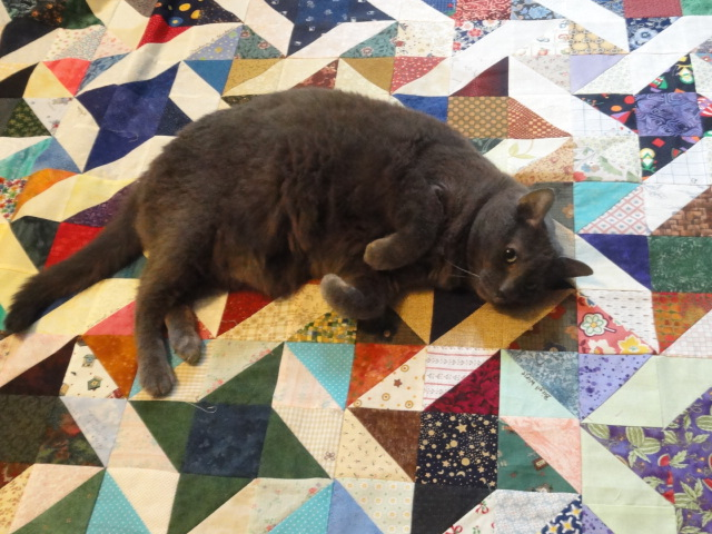 Kitty helping with the quilt